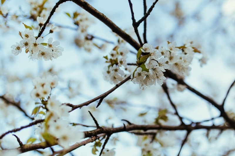 kaboompics_Close-ups of leaves, flowers and fruit on trees, part 1(1)